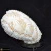 Muschellampe 146